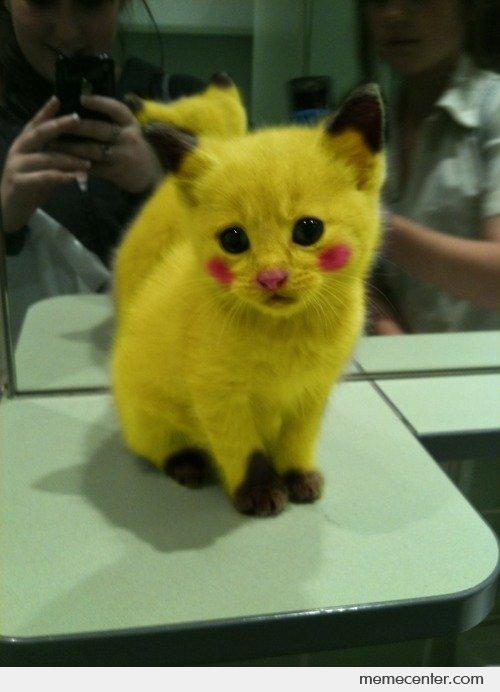 Pikachu-Kitty_o_93900 (1)